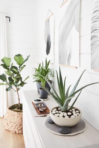 Pflegeleichte Zimmerpflanzen: Diese Pflanzen sind perfekt für alle, die keinen grünen Daumen haben