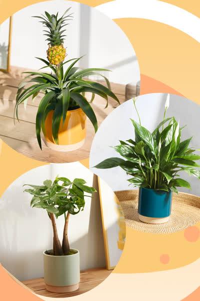 Diese hübschen Trend-Pflanzen dürfen im Sommer 2021 in keinem Zuhause fehlen - und du kannst sie ab 26 Euro shoppen